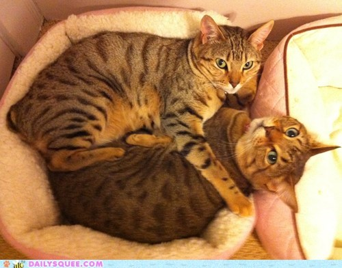 cat Cats cuddling hug hugging love lovers reader squees romance - 5572805376