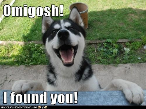 awesome,found you,happy,hide and seek,husky