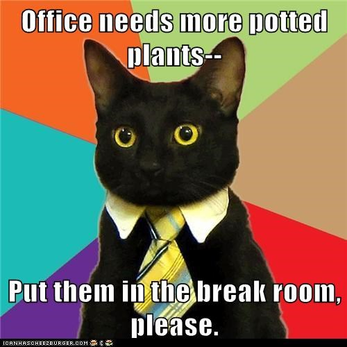 break room Business Cat offices plants potted plants workplace - 5572837632
