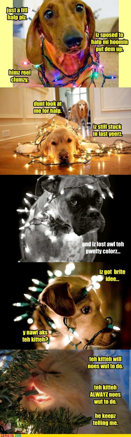 a little help please,best of the week,boxer,cat,christmas,christmas lights,comic,dachshund,golden retreiver,Hall of Fame,help,oops,stuck,tangled