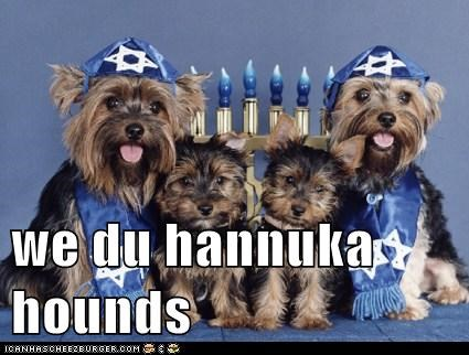 chanukah hanukkah happy hanukkah yorkshire terriers - 5573907712