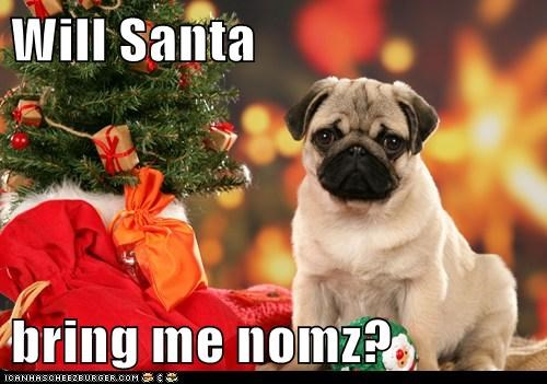 christmas,christmas present,food,noms,present,pug,santa