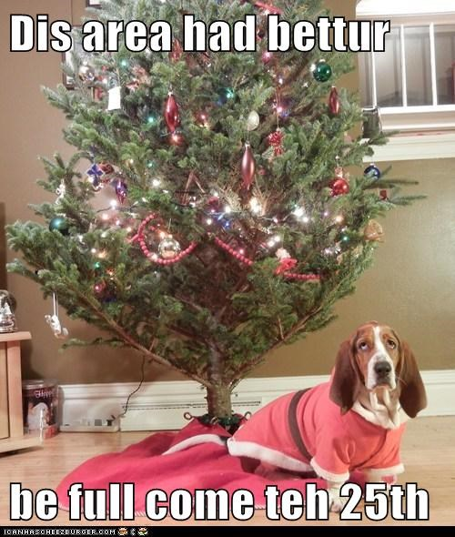 basset hound,christmas,christmas presents,christmas tree,merry christmas