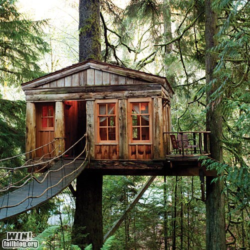 architecture,design,Forest,home,house,tree house