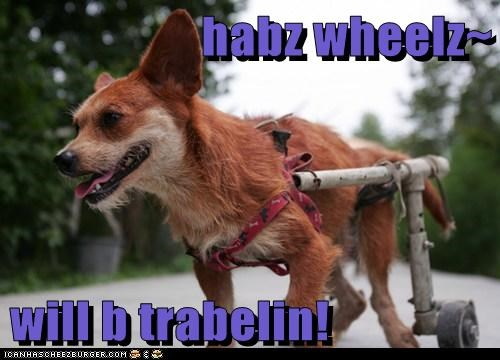 awesome disabled handicapped happy dog have wheels will travel mixed breed whatbreed wheelchair wheels - 5574379520