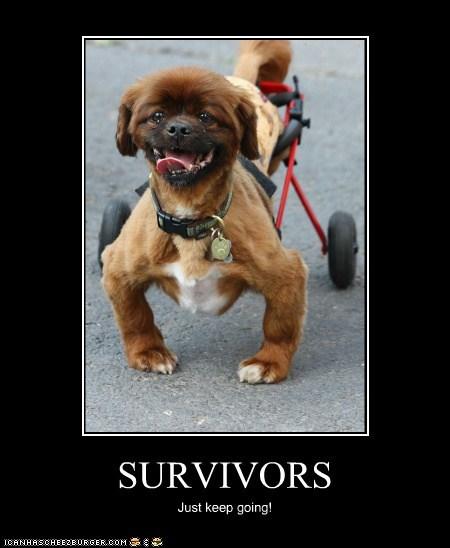 SURVIVORS Just keep going!