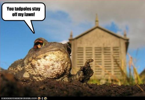 animals caption captioned frog frogs get off my lawn grumpy old man pointing toad toads - 5574988800