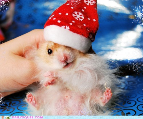 costume dressed up hairy hamster hat pun santa twelve squees of christmas