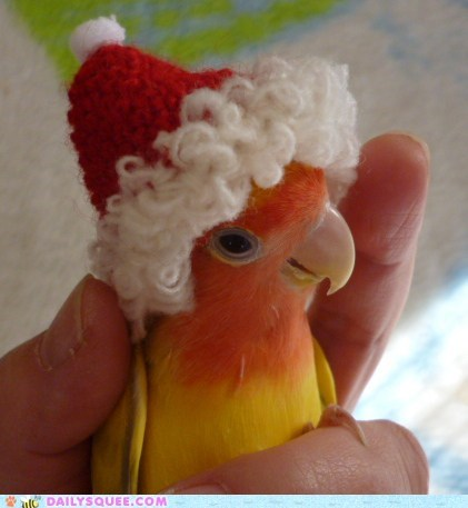 adorable,costume,dressed up,Hall of Fame,parakeet,pun,santa,song,tiny,twelve squees of christmas,walking in a winter wonderland