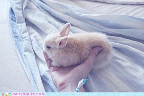 baby bunny cuddling glamor glitz hand handheld happy bunday holding preference presentation rabbit soft softness tiny warm warmth - 5575080192