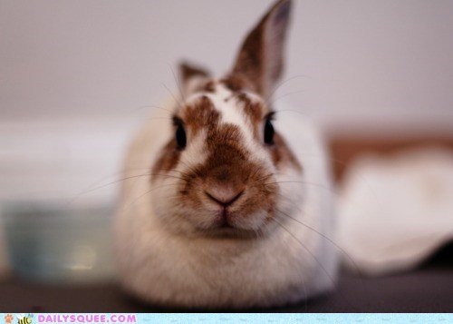 bunny,do not want,expression,glower,glowering,happy bunday,hunch,rabbit,sleepy,stare,Staring,unhappy,waking up