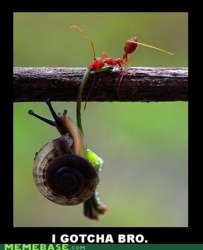 animals ant bro Memes snail - 5575162624