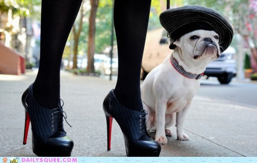 acting like animals chic dogs fashion french bulldogs haute couture pun style walking - 5575177984