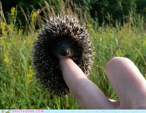 baby better comparison dangling finger Hall of Fame hand hedgehog holding mittens tiny - 5575198720