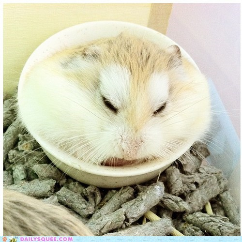 bed breakfast breakfast in bed dish food hamster same difference sleeping - 5575207424