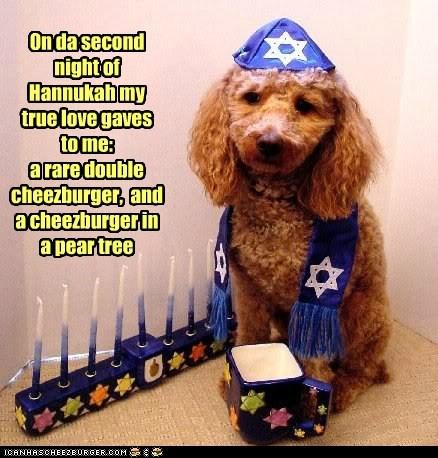 Cheezburger Image 5575229184