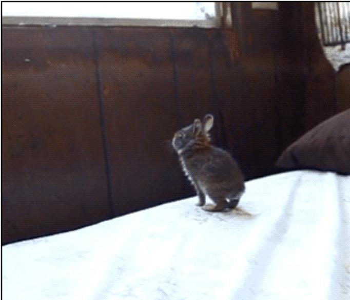 bunnies Funny GIFs gifs rabbit gifs cute funny rabbits jo38ma3 - 5575685