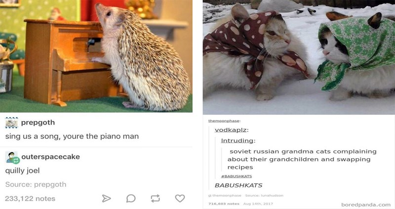 animal memes from tumblr
