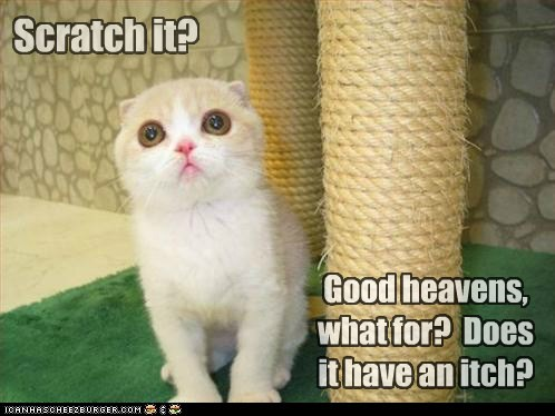 caption captioned cat confused do not want itch question scratch scratching scratching post - 5575981312