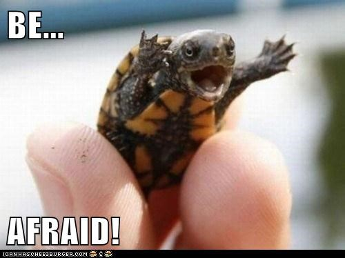 animals baby turtle be afraid turtle - 5577698816