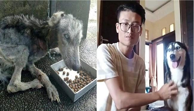 dogs news icanhascheezburger husky malnourished dogs sad story story - 5577733
