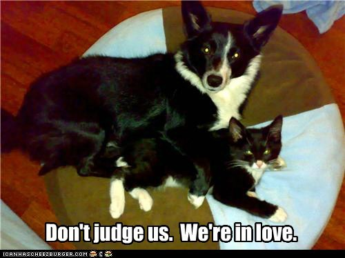 caption captioned cat coloring dogs dont in judge love lovers similarities us - 5578349568