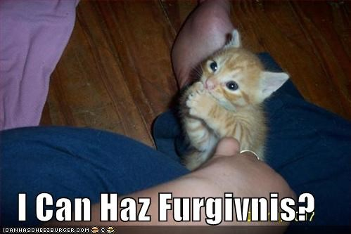 forgiveness,kitten,lolcats,lolkittehs,orange,praying