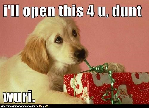 adorable,christmas,christmas morning,christmas present,cute,help,helpful,helping,labrador retriever,opening presents