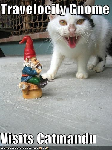 travelocity gnome visits catmandu cheezburger funny memes
