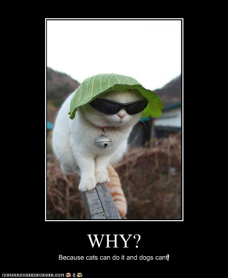WHY? Because cats can do it and dogs cant!