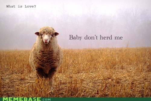 best of week herd hurt me Lame Pun Coon love puns sheep - 5579357696