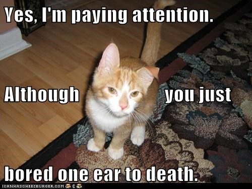 although attention bored but caption captioned cat caveat Death ear just one paying tabby yes