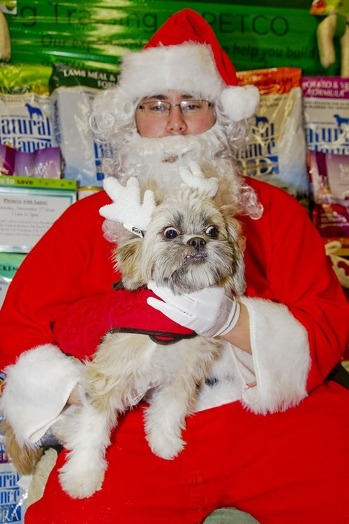 derp face dogs pet santa scared