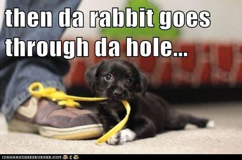 rabbit method shoe shoelace shoelaces shoes tying tying your shoes whatbreed - 5579870720