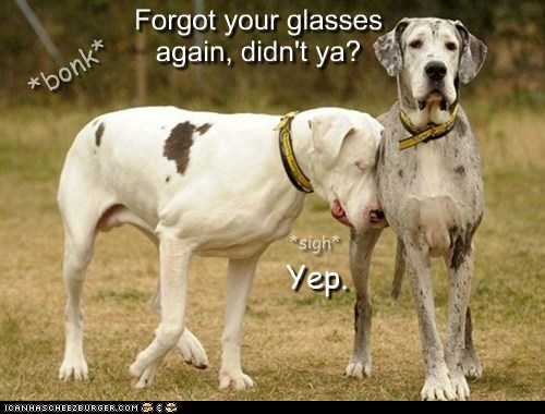 awesome,blind dog,disabled,friends,friendship,glasses,great dane,handicapped,help,seeing-eye dog