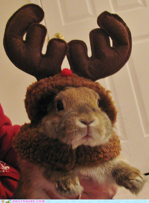 bunny christmas costume do want dressed up happy bunday rabbit reader squees reindeer treats waiting