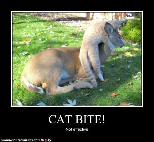 CAT BITE! Not effective