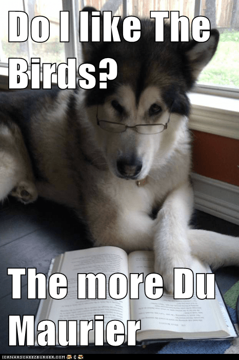authors,Condescending Literary Pun Dog,daphne du maurier,dogs,puns,reading,the birds,writers