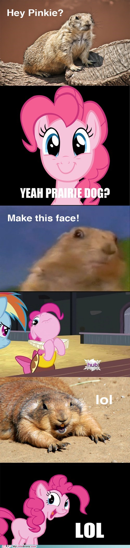 best of week comics i-dunno-lol-prairie-dog pinkie pie - 5581476864