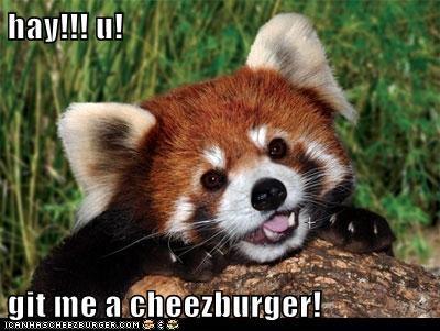 Cheezburger Image 5581512448