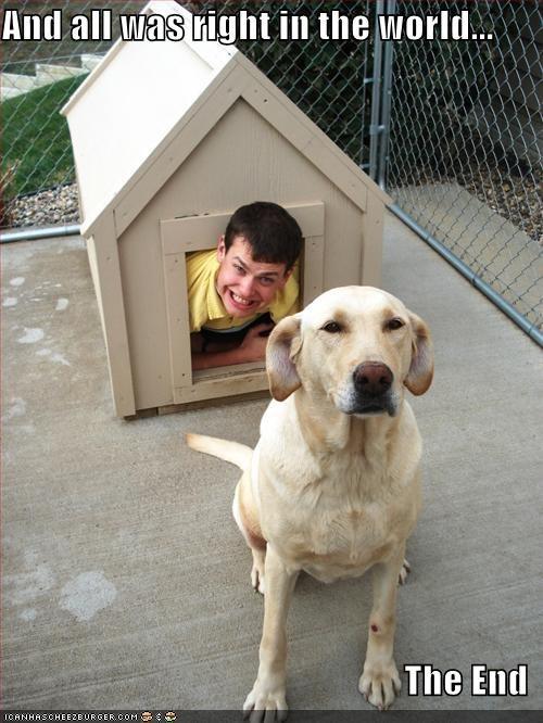 dog house labrador - 558151936