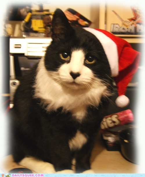 cat,christmas,costume,do not want,dressed up,reader squees,santa,unhappy