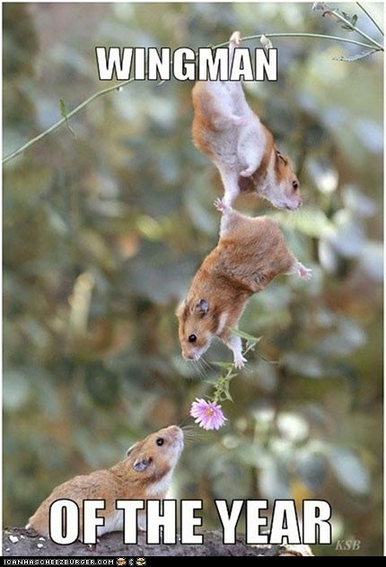 awww Flower hamsters rodents sweet wingman