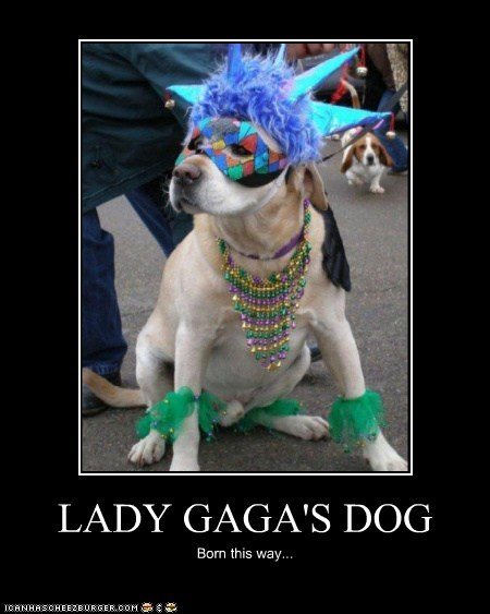 LADY GAGA'S DOG Born this way...