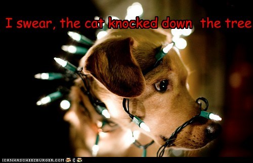 I swear, the cat knocked down the tree