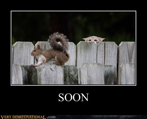 cat,SOON,squirrel,funny