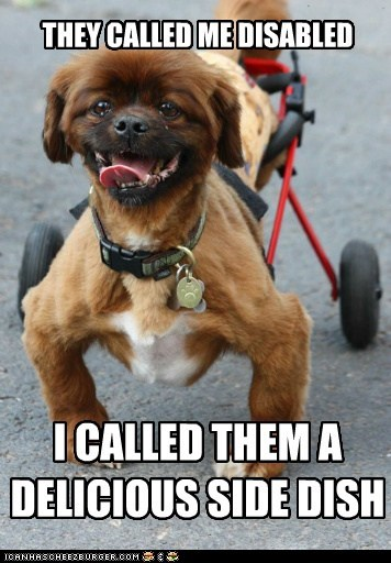 awesome dog,delicious,disabled,handicapped,mixed breed,side dish,whatbreed,wheelchair