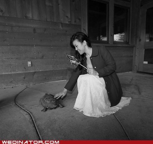 bride funny wedding photos turtles - 5583115520