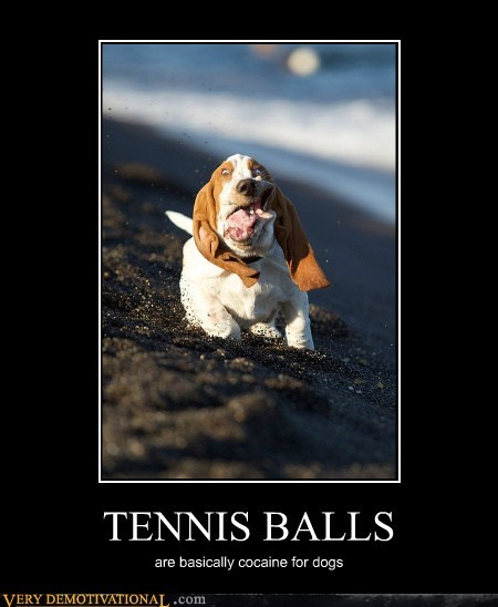 animals cocain dogs Hall of Fame hilarious tennis balls - 5583269632