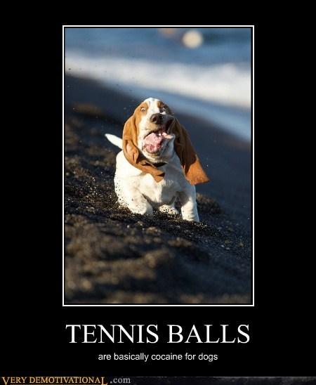 animals cocain dogs Hall of Fame hilarious tennis balls - 5583269632